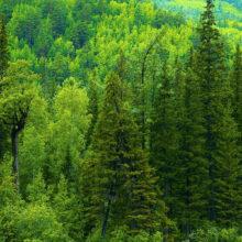 Музыкально-лирический альбом «Люблю России шум лесной…» @ Библиотека им. Н.Ф. Гастелло