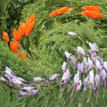 Экологическая страничка «Хоровод цветов» @ Библиотека им. Е. А. Никонова